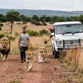 Kevin Richardson alături de leii din reclamă