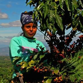 Zdjęcie Rainforest Alliance za: Wikipedia