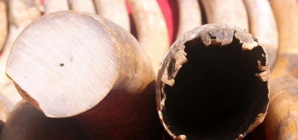 Ivory. Courtesy Flickr via Photopin CC