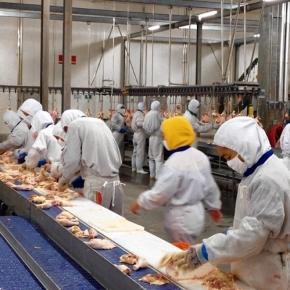 Muncitorii din fabrici de procesare a cărnii poartă scutece