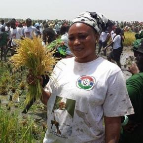 A woman at President Yahya Jammeh's farm cultivating rice / Sam Phatey, SMBC NEWS