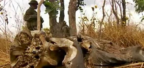 Screenshot. BBC The end of the elephants/Youtube