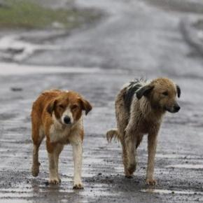 Bonus di 500 euro se possiedi un animale domestico, chiarimenti … – Blasting News