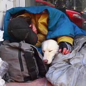 Sem abrigo e o seu cão dormem ao relento