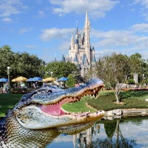 Un aligator a tras în apă un băiețel la Disney World în Orlando-Florida