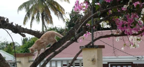 La chatte d'Isaac Newton s'appelait Marion