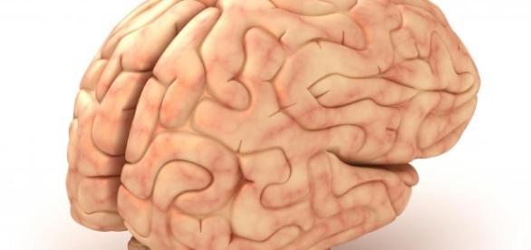 W jaki sposób zadbać z pomocą diety o prawidłową pracę mózgu