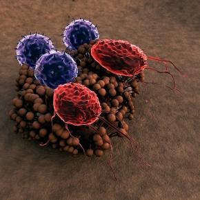 Video Highlights Twins Study Microbiome Investigation | NASA - nasa.gov
