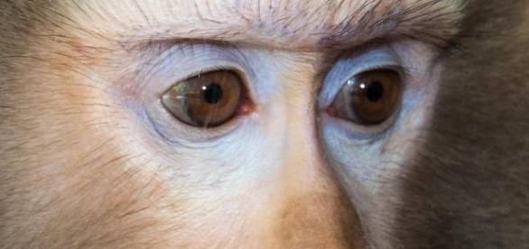 Mischievous Macaque Monkey Photo credit: zoochat.com