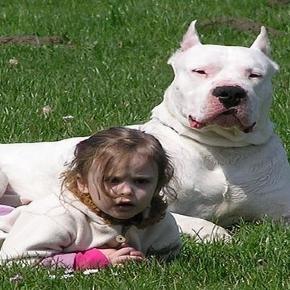 Non ci sono cani aggressivi, ma comportamenti errati