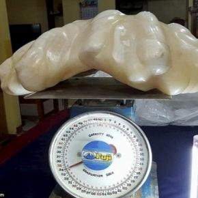 Fisherman found giant pearl worth $100million and kept it under ... - dailymail.co.uk
