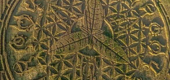 Un nouveau crop circle Angleterre Aout 2016 - copiright Gyro
