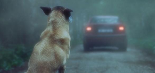 """La dernière campagne de sensibilisation """"30 millions d'amis"""" contre l'abandon des animaux"""