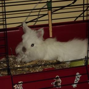 Petite cage pour lapin nain - lespetitslapins.fr