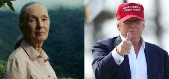 Dr Jane Goodall und Donald Trump (Quelle: ABC News)