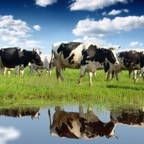Agricultura și zonele umede contribuie la creșterea nivelului metanului din atmosferă