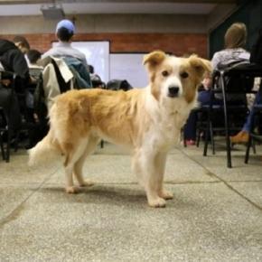 Cães de Diogo ajudam no aprendizado dos alunos (Foto: Divulgação/New Pangea)