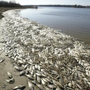 All Of A Sudden, Fish Are Dying By The MILLIONS All Over The Planet - activistpost.com
