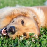 Le chien n'est pas le meilleur ami de l'homme ! - ubergizmo.com