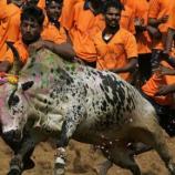 India Lifts Ban on Bullfighting Sport Jallikattu - newsweek.com