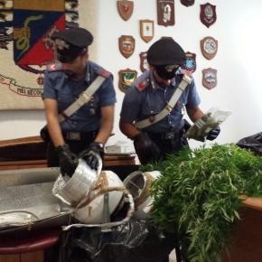 Sequestro di piante di marijuana, foto di repertorio