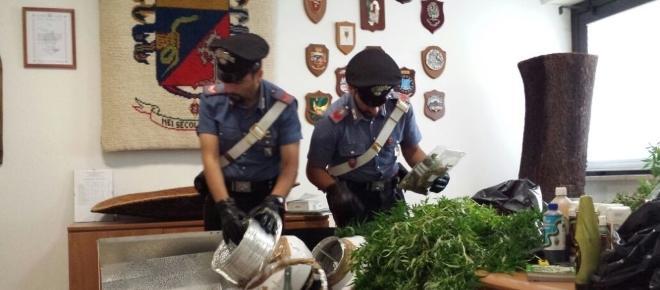 Intervengono per sedare una rissa trovano una piantagione di marijuana