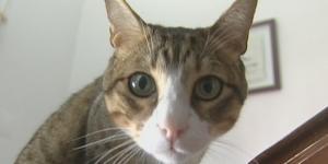 Donos de gatos podem receber conselhos da Linha Saúde Animal 24