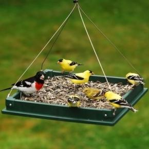Anyone who enjoys feeding birds will enjoy artist Chris Bleicher's BirdCam project. / Photo via Blasting News and ebay.com