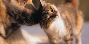 In arrivo la mutua per cani e gatti.