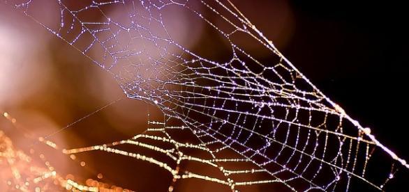 """Altweibersommer - """"Spinnfäden"""" sehen wir heute das ganze Jahr über Foto: stern.de"""