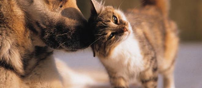 In arrivo la 'mutua' per cani e gatti: ecco di cosa si tratta