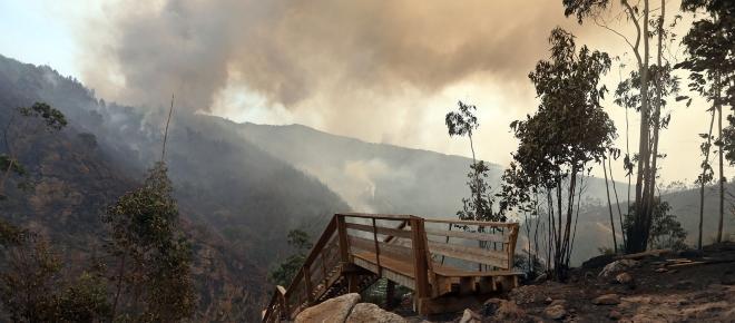 Arouca apela por novas estratégias de prevenção e combate a incêndios