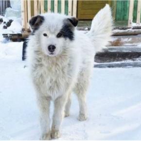 Foi esse cão que salvou o menino do frio