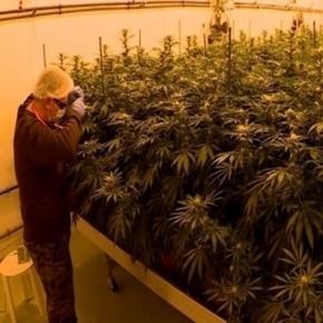 Coronel toma conta de plantação de maconha na Itália.