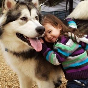 Cuando perro y dueño se miran, ambos muestran un aumento de la oxitocina