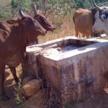 Le groupement Kawtal Konsiré du village de Ngaou Mokon au Cameroun ... - rfi.fr