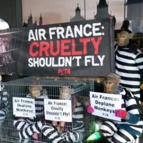 Aktionsbericht: Internationale Proteste im Februar 2015 - Stop ... - stopvivisection.net