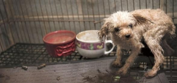 """San Francisco lawmakers pass law targeting """"puppy mills."""" -- rollingstone.com"""