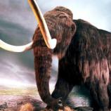 Le retour des mammouths, bientôt une réalité ? | melty - melty.fr