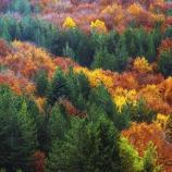 Il gioco di colori degli alberi