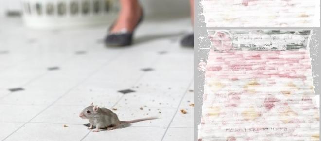 Consumidor encontra fezes de rato em biscoito e receberá indenização de R$ 5 mil