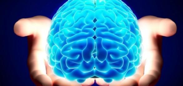 LE NEUROSCIENZE SOCIALI Approcci allo studio del cervello ... - groovehall.com