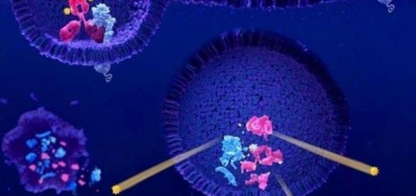Cómo apagar el cáncer: científicos convierten células cancerígenas ... - elconfidencial.com