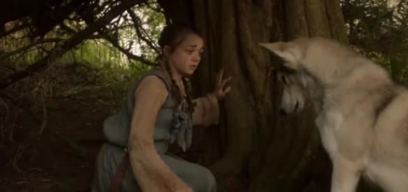 Arya y Nymeria están separadas desde la primera temporada.