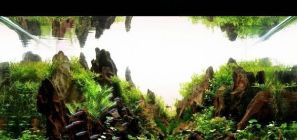 """""""Montanhas"""" submersas e lindos peixinhos colorindo-as. Apaixone-se pelo aquapaisagismo"""