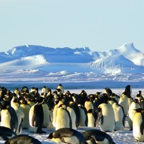 Emperor penguins huddle on the ice. Siggy Nowak-Pixabay