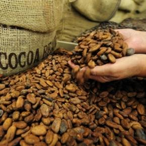 Hot Chocolate: Somebody Just Bet $1 Billion On Cocoa : Planet - npr.org