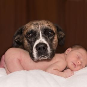 baby and dog, Karenwarfel, pixabay.com cc0