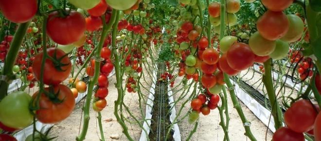 Países desarrollados aumentan inversiones agropecuarias