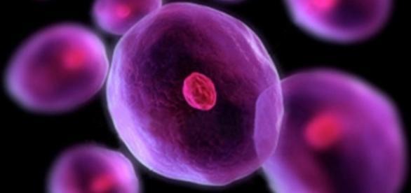El tratamiento de células madres nos abre bastantes posibilidades ... - doctorsempertegui.com